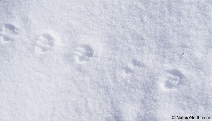 In the garden animal tracks in the garden in manitoba for House of tracks