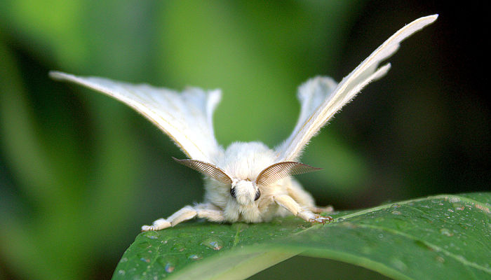 I give you the Venezuelan Poodle Moth : WTF