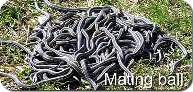 Mating_Ball.jpg