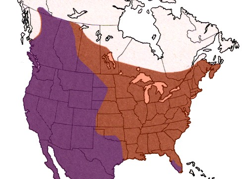 U S Mountain Lion Population the cougar  or mountain