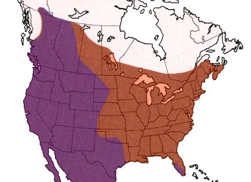 eastern puma region