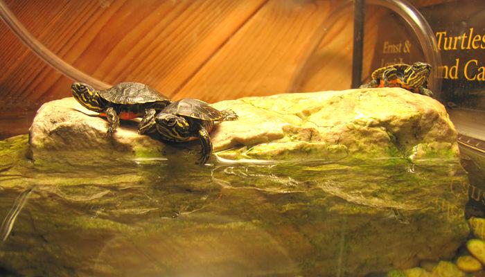Baby Turtle Blog Updates